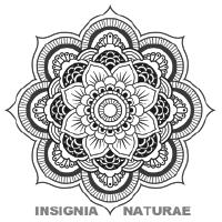 Insignia Naturae / Bloemstylist en Florale workshops